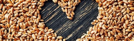 Nederlanders eten massaal te weinig vezels