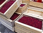 Flinndal Cranberry